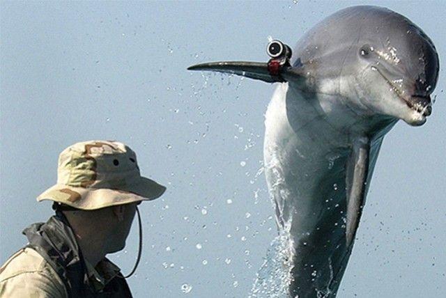 La autoridad Palestina acusa a Israel de utilizar delfines espía